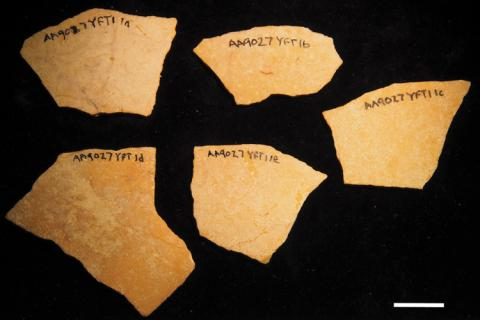 photo of collected ostrich shell fragments with handwrittem notation of an alpha numeric code in permanent marker on the shells
